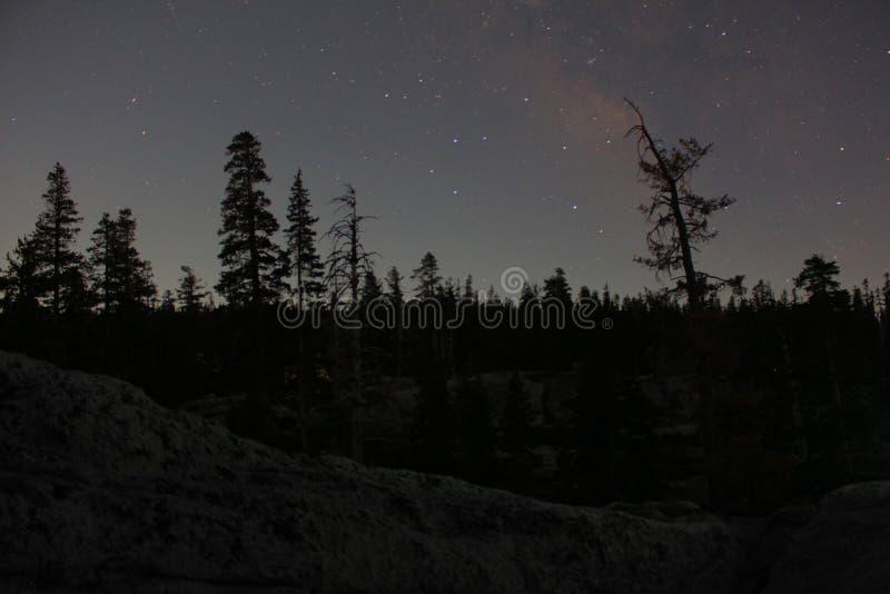 Sterrige hemel boven een bos stock foto