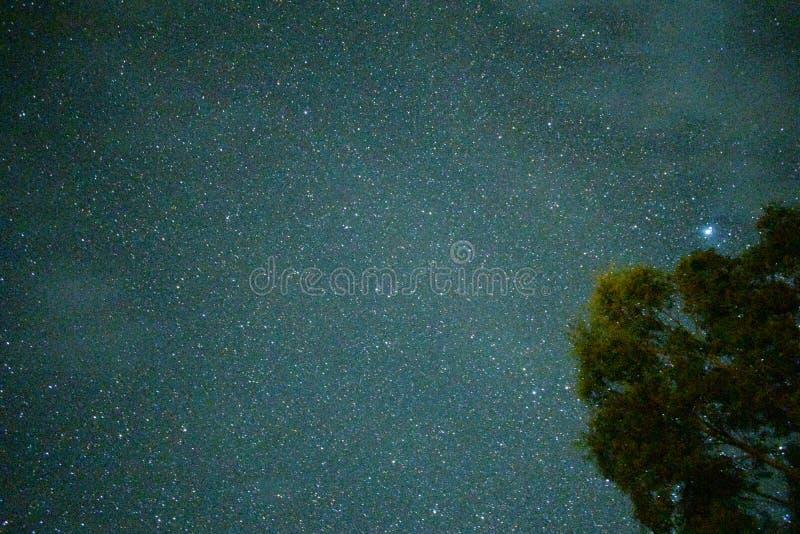 Sterrige Nacht in bos royalty-vrije stock foto