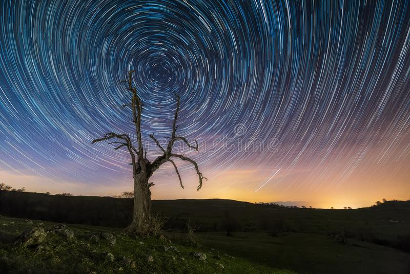 Sterslepen, circumpolair, over een dode boom royalty-vrije stock afbeeldingen