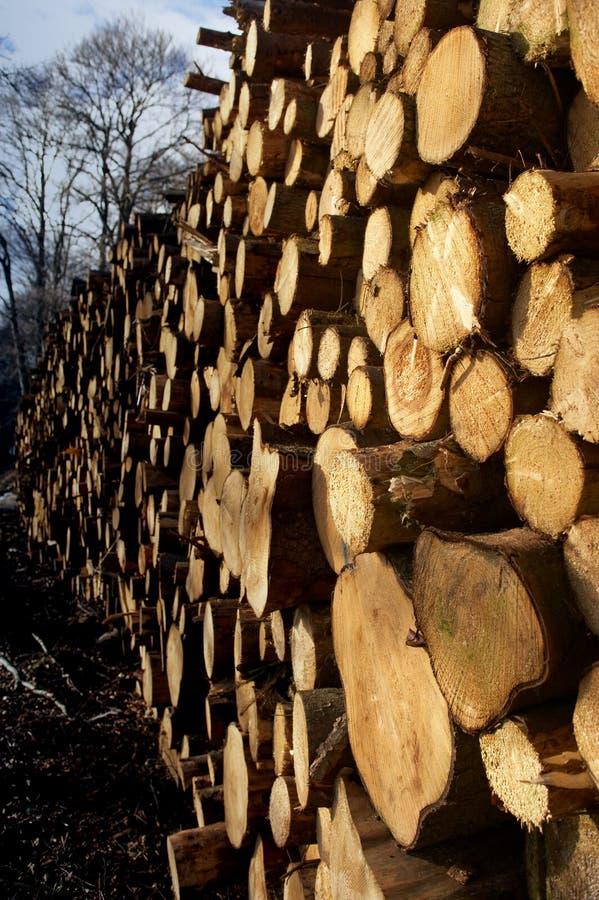 stertą drzewa zdjęcie royalty free
