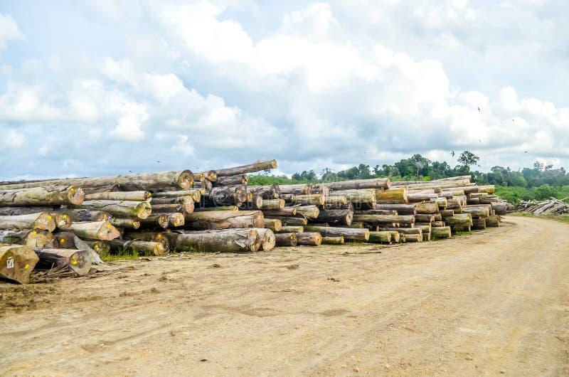 Sterta drewno w bela jardzie zdjęcie stock
