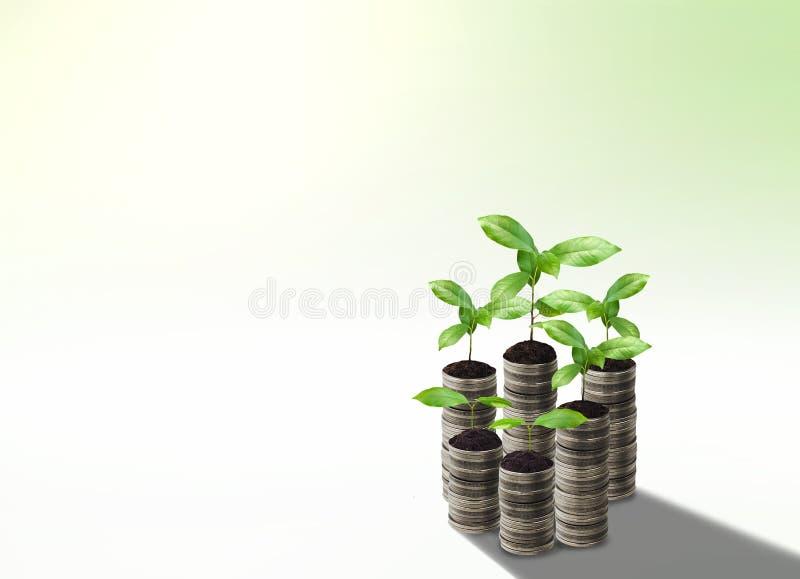 Sterta srebna moneta i mały rośliny pojęcia przyrost fotografia royalty free