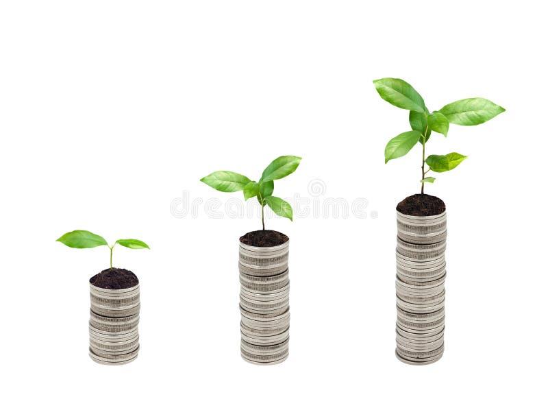Sterta srebna moneta i mały rośliny pojęcie zdjęcia royalty free