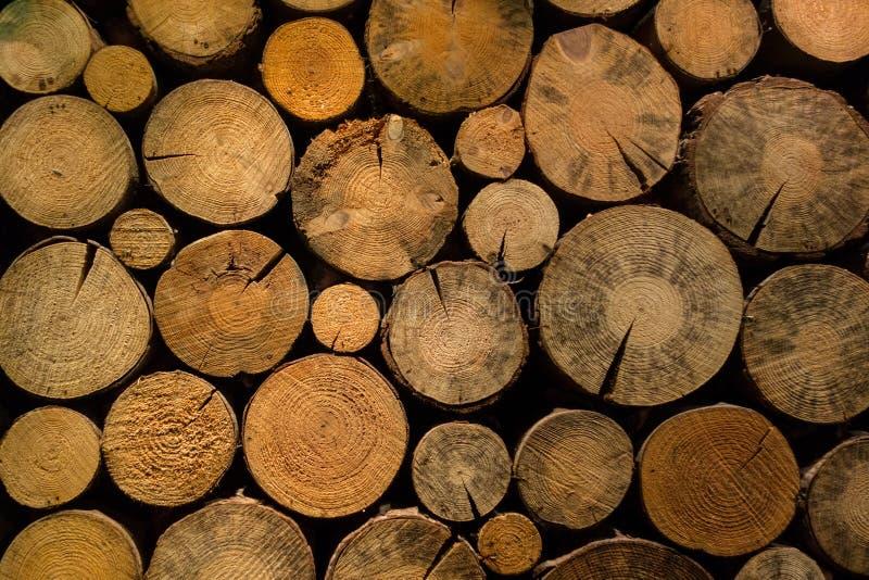 Sterta wysuszona łupka brzozy drewno fotografia stock