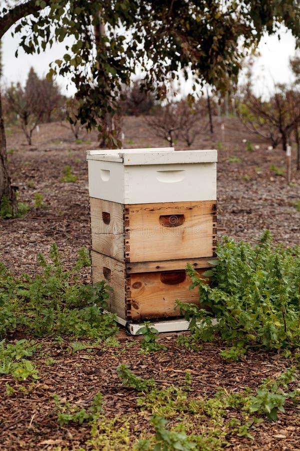 Sterty langsroth pszczoły roje zdjęcia royalty free