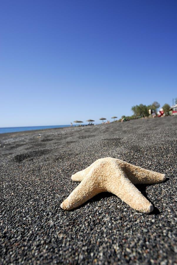Stervissen in Santorini -1 royalty-vrije stock foto's
