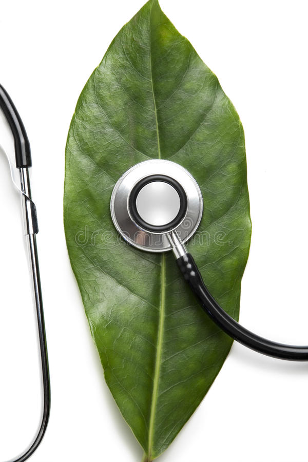 Download Stethoscope on a leaf stock image. Image of healthy, leaves - 17032071