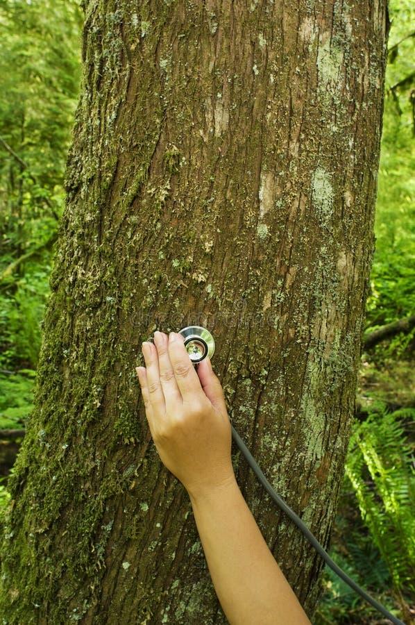 Stethoskop auf dem Baum, der Gesundheit überprüft stockbild
