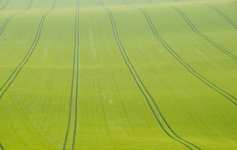 Steunbalktekens op een gewassengebied stock afbeeldingen