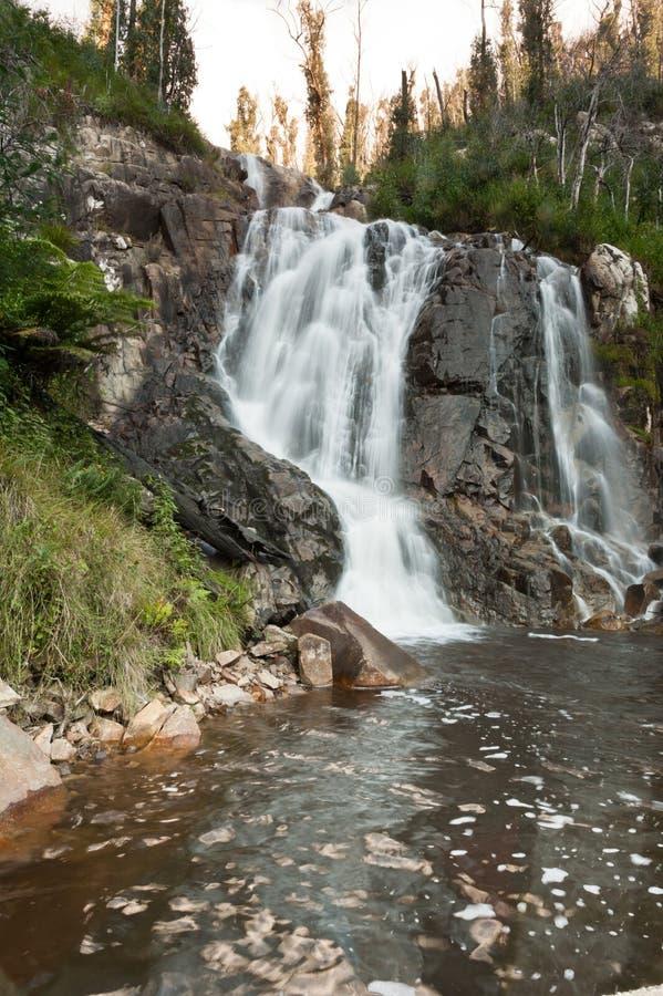 Stevenson cai no vale de Yarra imagens de stock