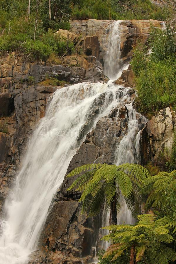 Stevensons Falls Marysville Victoria Natural Waterfalls stock photography