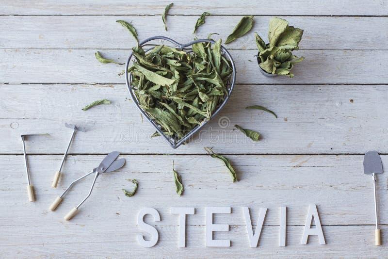 Stevia στοκ φωτογραφίες με δικαίωμα ελεύθερης χρήσης
