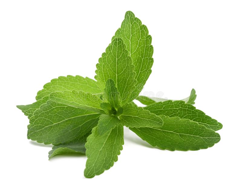 Stevia stock foto's