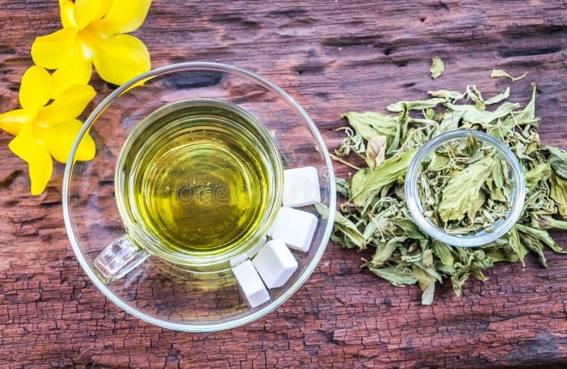 Stevia στοκ εικόνες με δικαίωμα ελεύθερης χρήσης