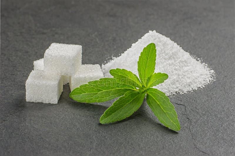 Stevia låter vara med steviapulver på en kritiseraplatta arkivbilder