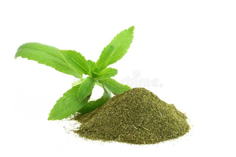 Stevia Rebaudiana immagine stock libera da diritti