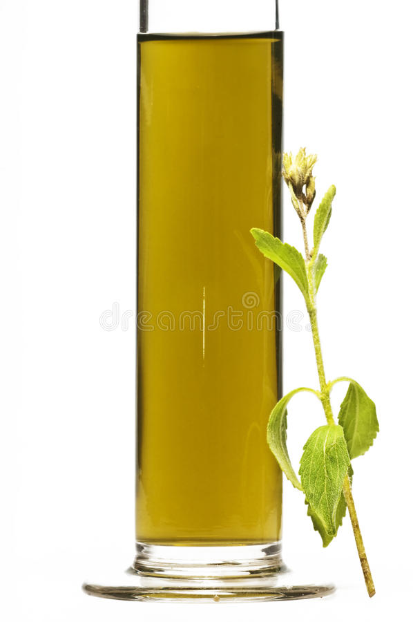 Stevia rebaudiana, fluid royalty free stock photos