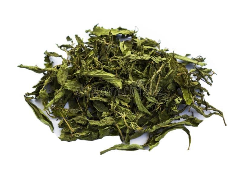 Stevia rebaudiana secco Bertoni, zucchero dolce della foglia isolato immagini stock libere da diritti