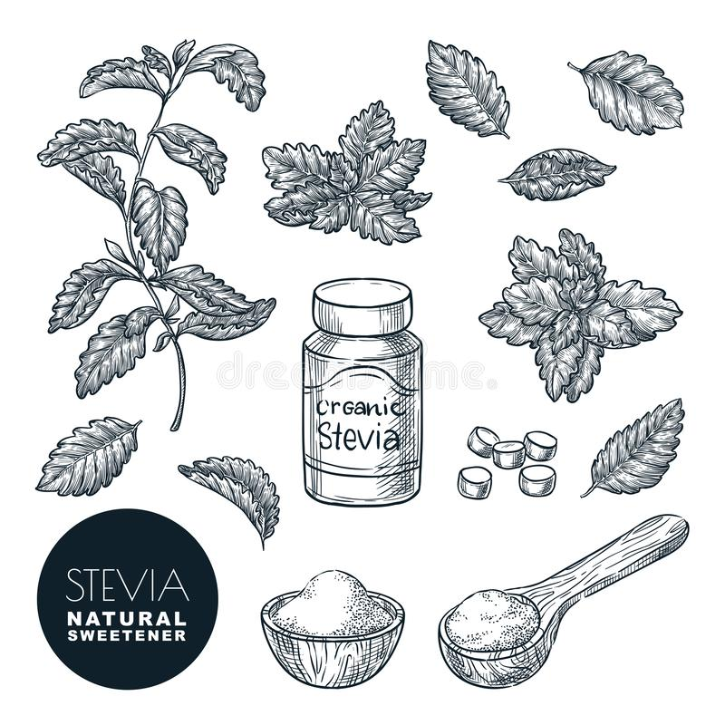 Stevia roślina i liścia nakreślenia wektoru ilustracja Naturalny organicznie słodzik, cukrowa zdrowa alternatywa ilustracji