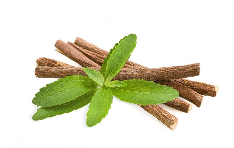 Stevia y regaliz imagen de archivo libre de regalías