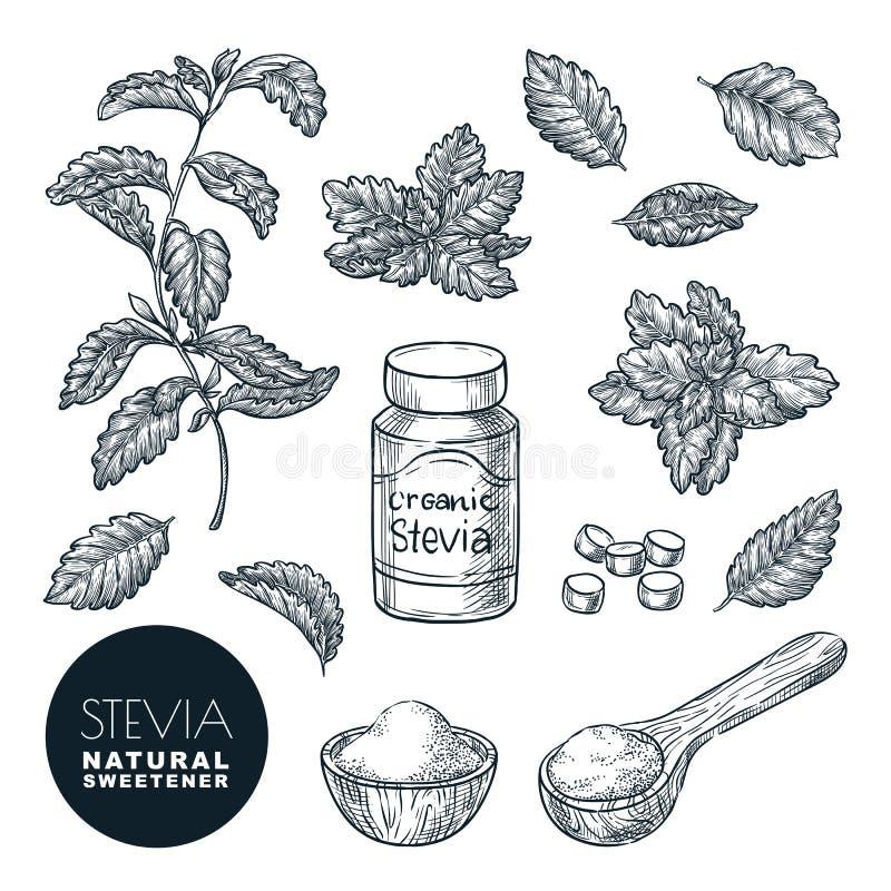 Steviaanlage und Blattskizzenvektorillustration Natürlicher organischer Süßstoff, Zuckergesunde Alternative stock abbildung