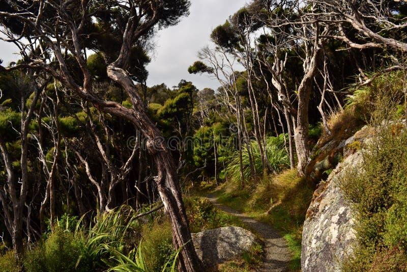 Stewart wyspy Rakiura ślad, Nowa Zelandia zdjęcia stock