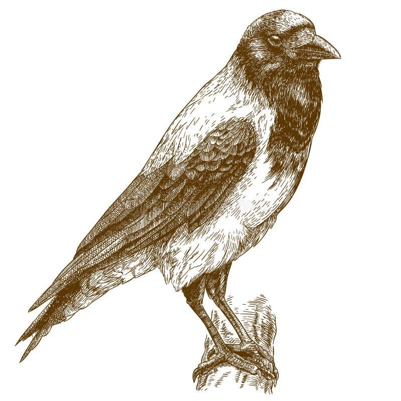 Stichillustration der Krähe stock abbildung