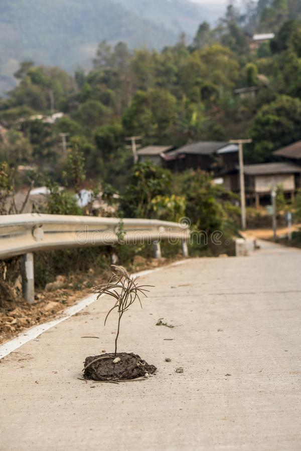 Stick stuck in cow shit on Asphalt road near the mountain village in Thailand royalty free stock images