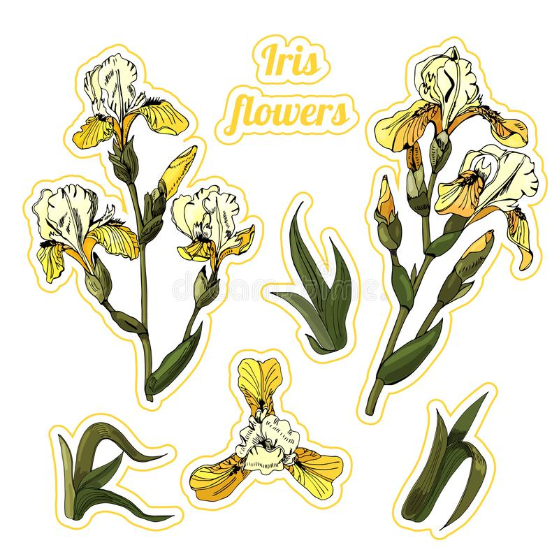 Sticker pack of  branches and leaves of yellow  iris flowers. Hand drawn ink and colored sketch. Collection of color objects isolated on white background vector illustration