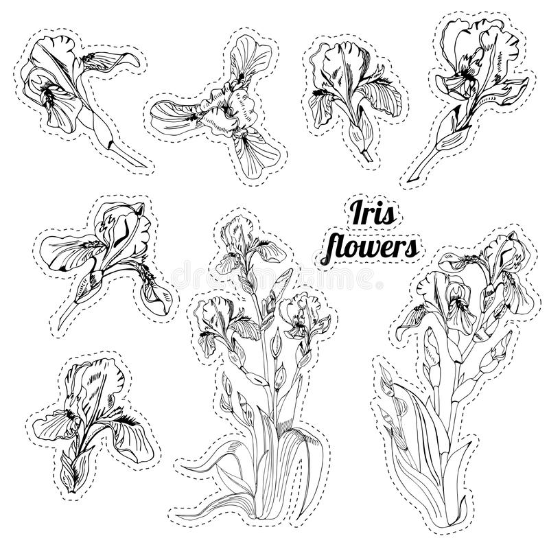 Stickers with bouquet and single buds of iris flowers. Hand drawn ink sketch. Collection of black objects. Stickers with bouquet and single buds of iris flowers vector illustration
