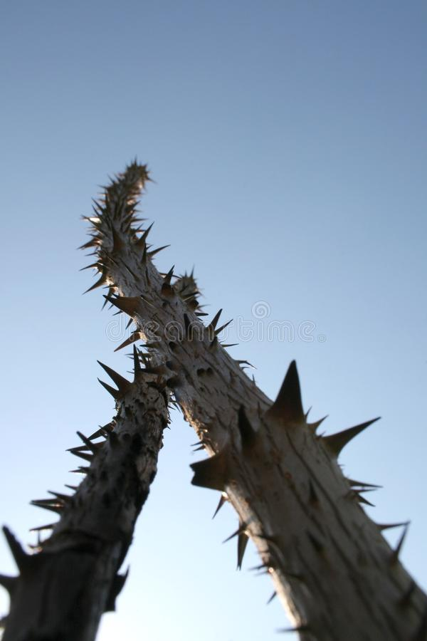 Download Sticks with thorns stock photo. Image of nature, blue - 3005742