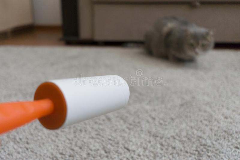 Sticky roller cleans the carpet from cat hair.  royalty free stock photography