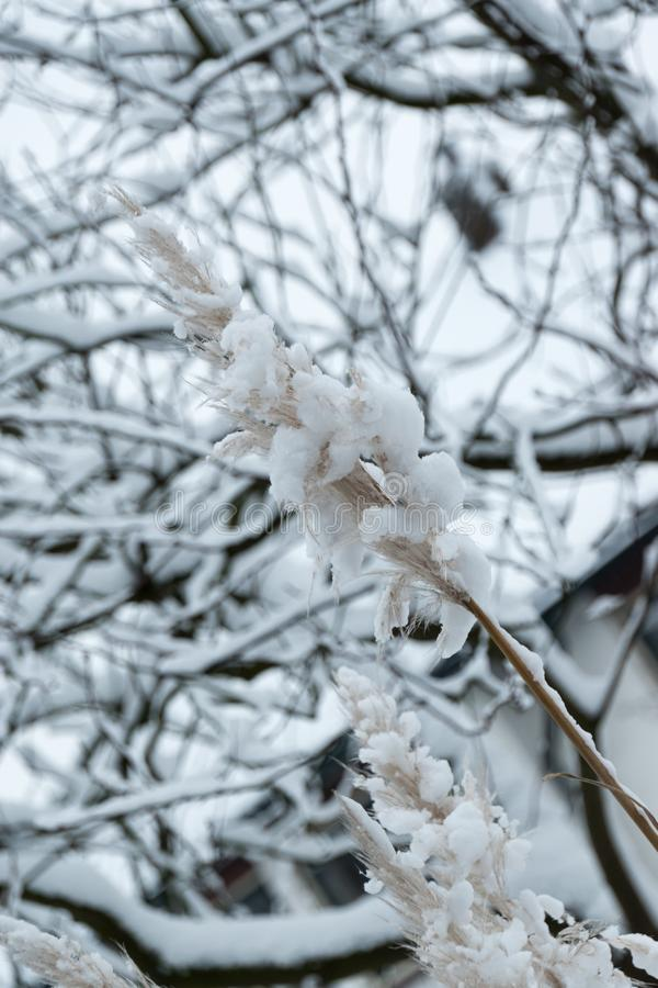Sticky snow makes everything looks different. Snow makes adverting looks different. Especially when it sticks to everything it lands on. Different point of view royalty free stock images