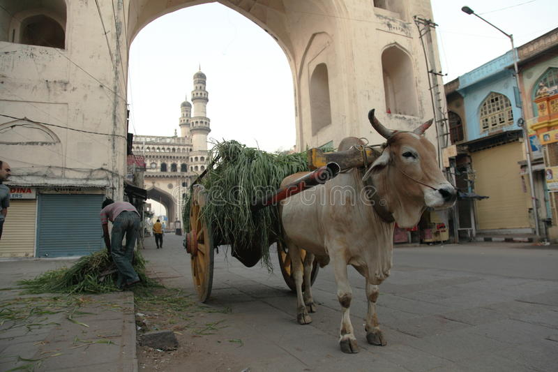 Stier, der Karre Indien zieht lizenzfreies stockbild