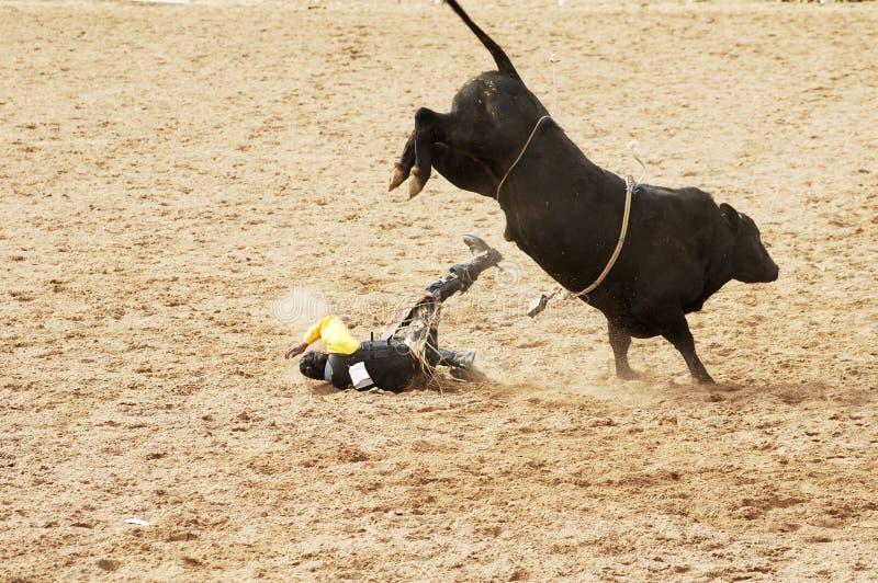 Stier die 6 berijdt royalty-vrije stock fotografie