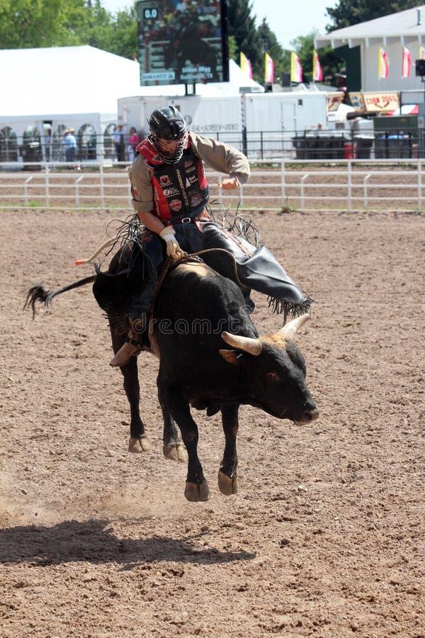 Stier het Berijden - Cheyenne Frontier Days Rodeo 2013 royalty-vrije stock foto