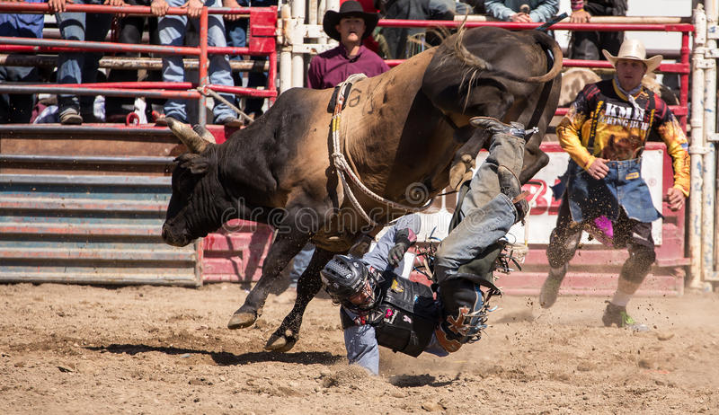 Stier Rider Gets Tossed royalty-vrije stock fotografie