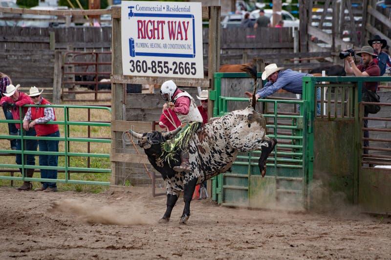 Stieren berijdende cowboy bij rodeo royalty-vrije stock foto