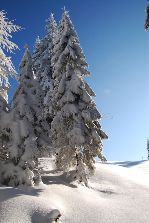 Stifte mit Schnee stockfotos