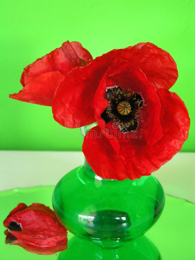 Download Stiil life with poppies stock photo. Image of reflection - 154234