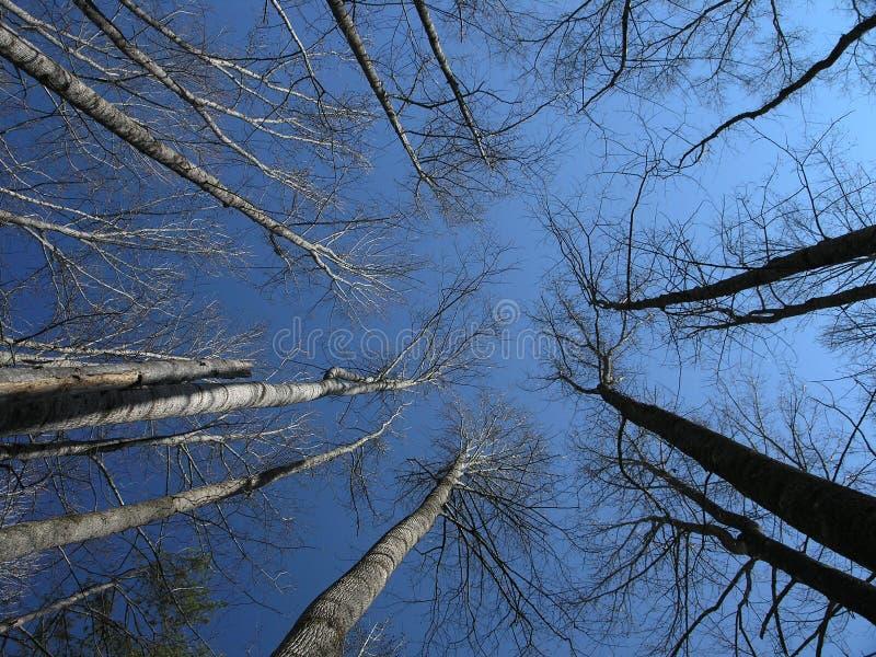 Stijgende Bomen stock afbeelding