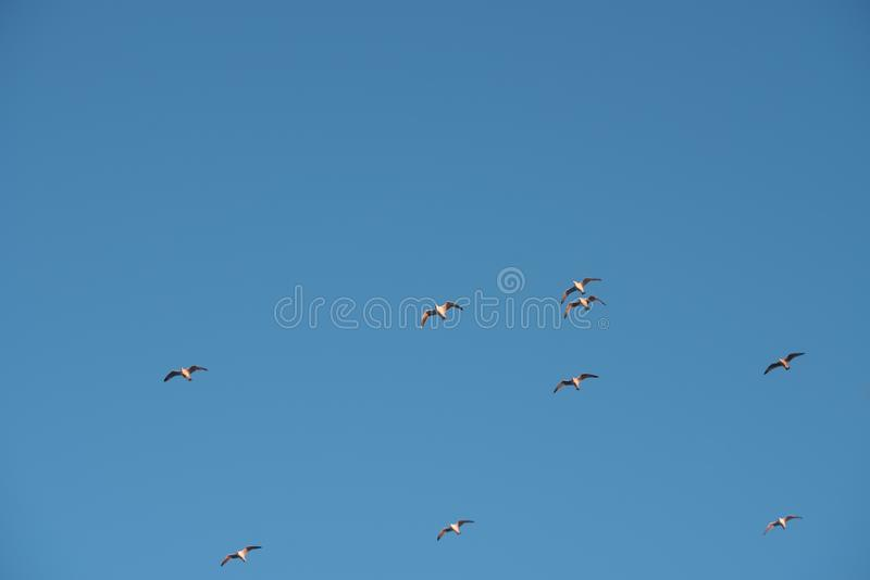 Stijgende meeuwen in de blauwe hemel royalty-vrije stock fotografie
