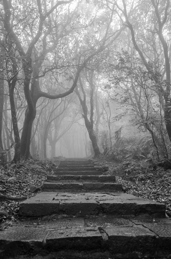 Stijgende wandelingsstappen in sombere mist in Taiwan royalty-vrije stock foto's