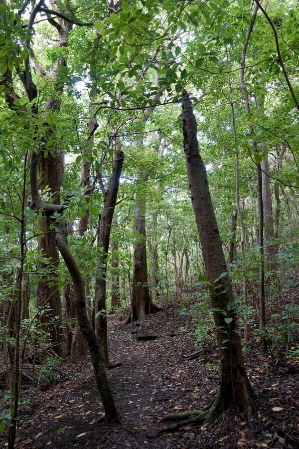 Stijgende Weg omhoog & x27; Ualaka& x27; een Sleep in het bos royalty-vrije stock foto's