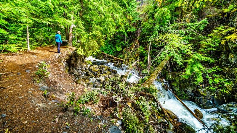 Stijging aan Whitecroft-Dalingen op McGillivray-Kreek in BC Canada stock fotografie