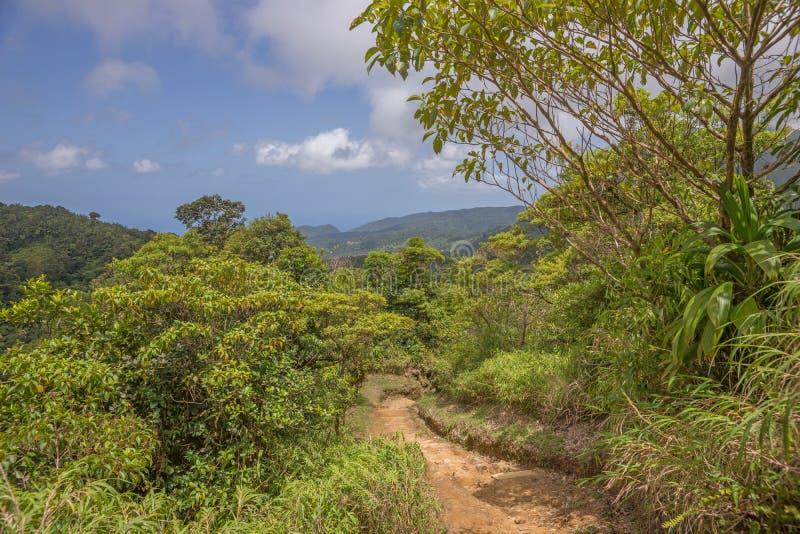 Stijging in het regenwoud van Dominica royalty-vrije stock afbeeldingen