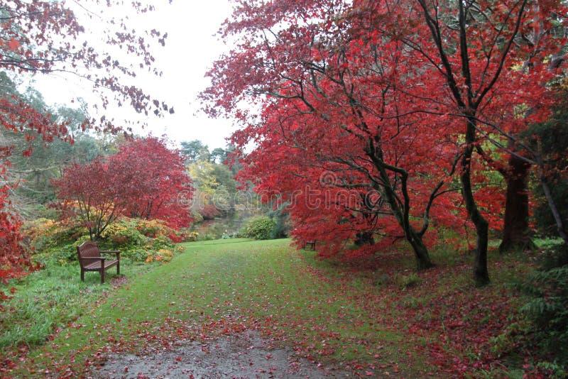 Stil binnenwater van het bosmeer De herfst in Wicklow, Ierland royalty-vrije stock foto