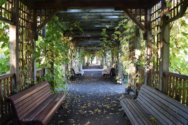 Stil en ontspannend parkgebied stock foto's