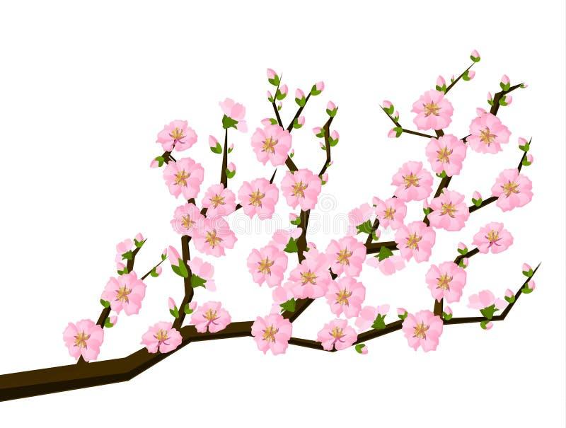 stil för fjäder för målning för blomningCherry orientalisk royaltyfri illustrationer