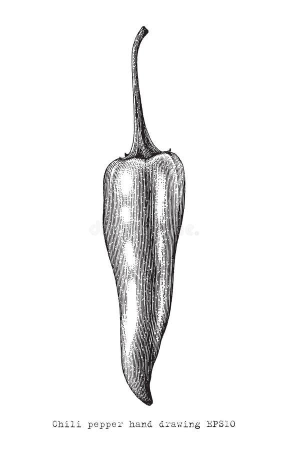 Stil för gravyr för teckning för chilipeperhand, chilipepertappning c royaltyfri illustrationer